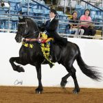 USEF Horse Of The Year Voting is now open - and a Friesian stallion is in the running