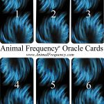 Animal Frequency Day Card Draw